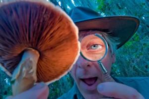 идентификация галлюциногенных грибов