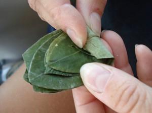 употребление листьев коки