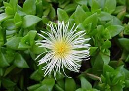 размеры гроубокса на 6 растения