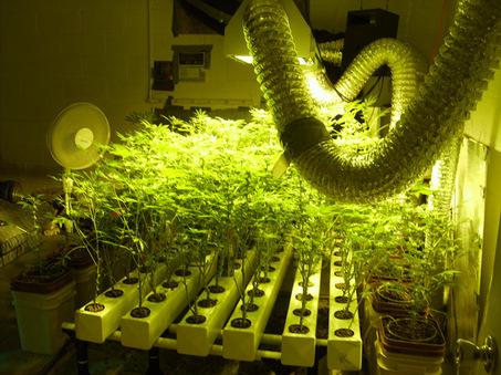 Гидропоника фото конопля мне нравиться курить траву