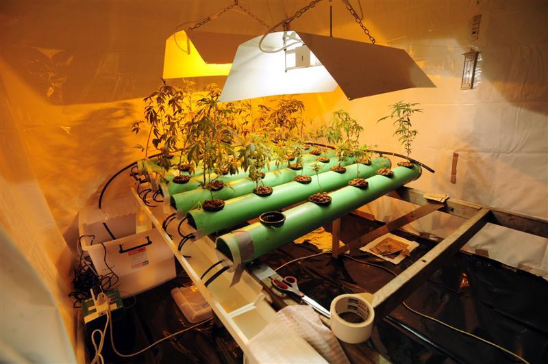 Гидропоника ифото марихуаны мосты модель спайсер