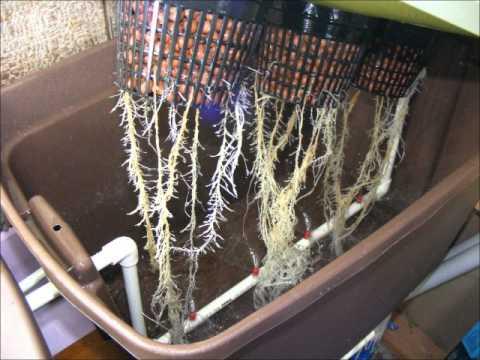 методе выращивания конопли