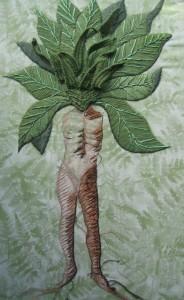 мандрагоры корень