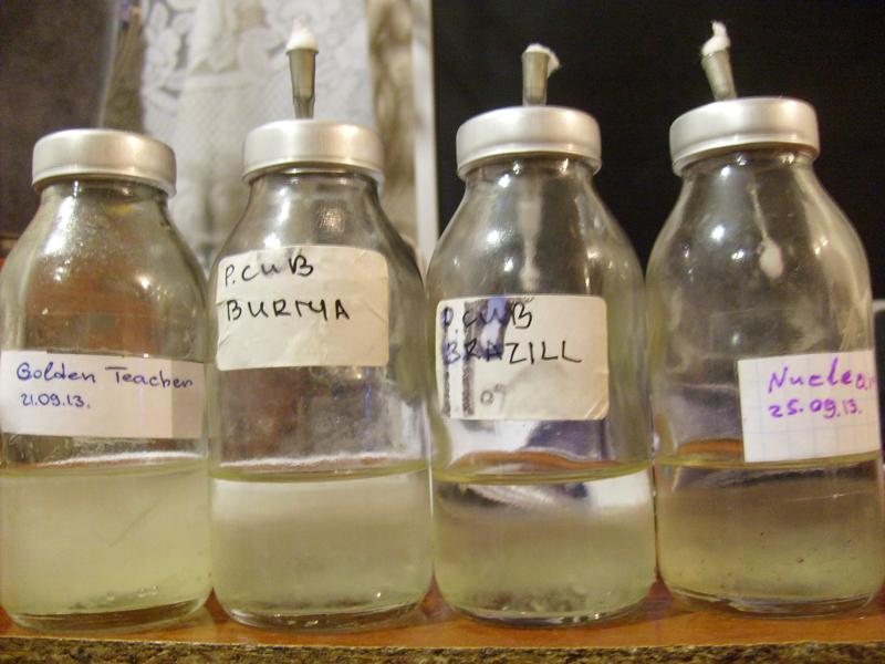 выращивание-мицелия-в-жидкой-среде-4