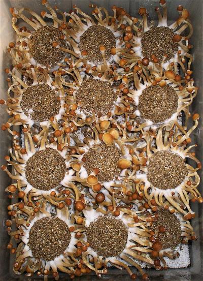 грибы на кейках