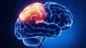 How-the-Immune-System-Attacks-the-Brain-Following-Head-Injury