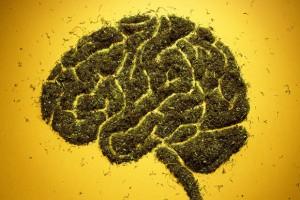 марихуана и мозг