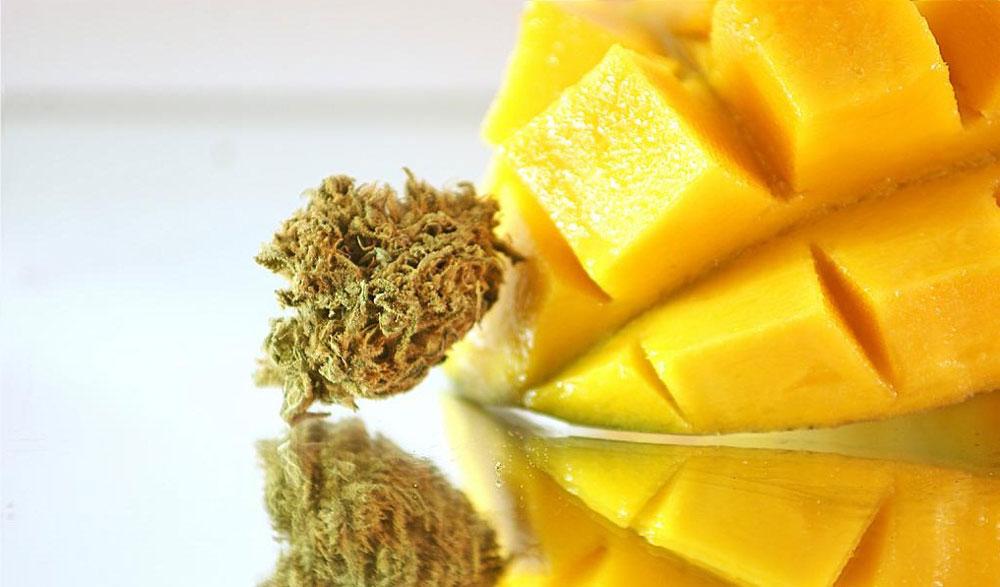 Как манго может усилить эффект марихуаны