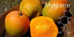 mango-myrcene-1