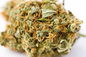 shishka-marihuany