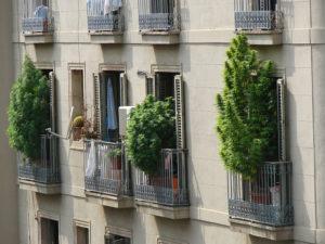 kannabis na balkone