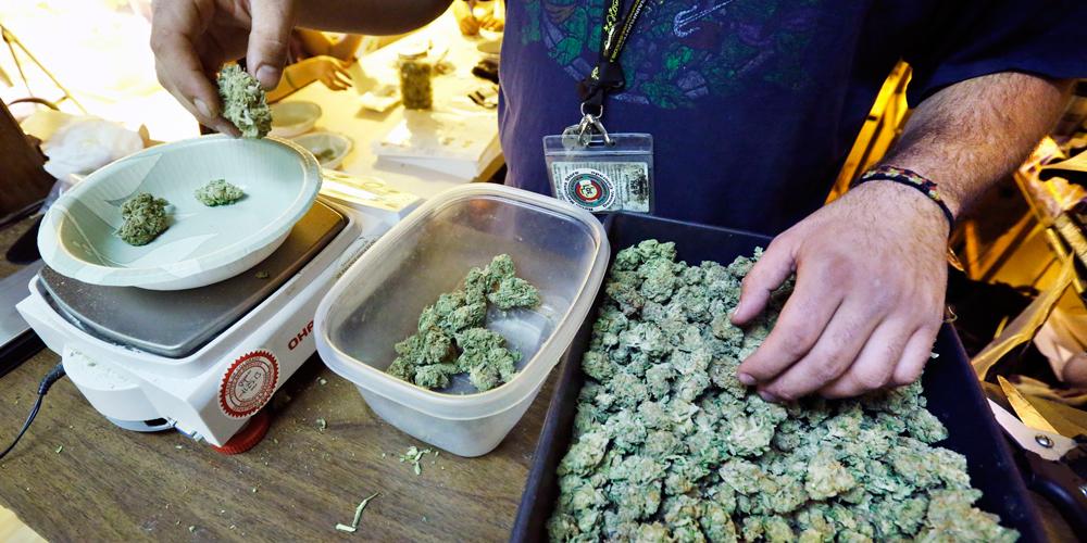 Марихуана в голландии фото марихуана за рулем штраф