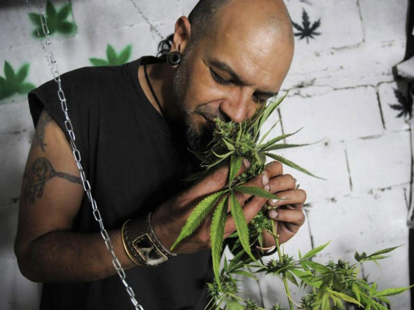 Ароматерапия марихуаны: поговорим о терпенах