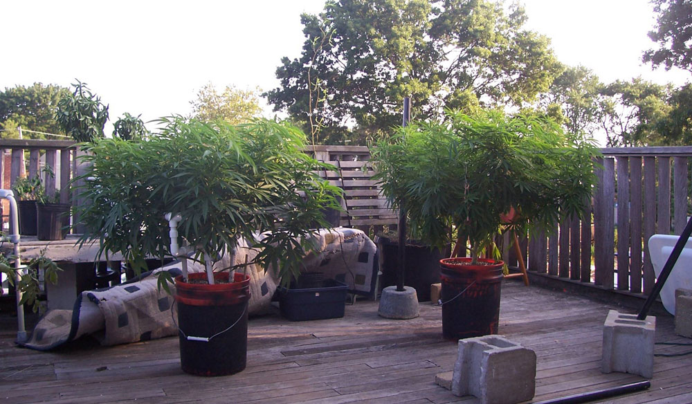 cannabis-containers