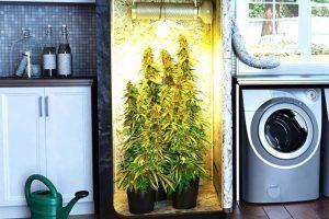 Как наилучшим образом организовать выращивание растений внутри помещения