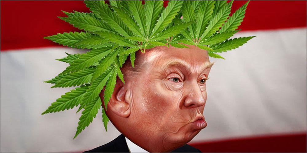 Разрушит ли Дональд Трамп индустрию каннабиса в США?