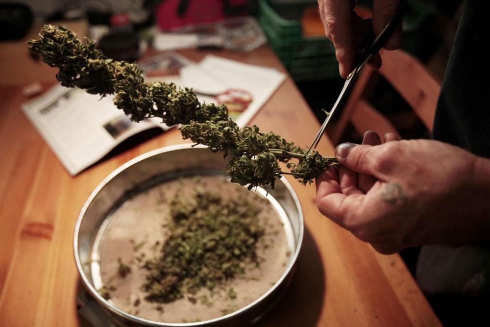 Как сделать марихуану прага где купить марихуану