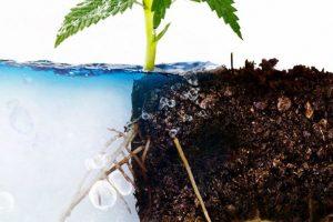 Как быстро вырастить гидропонику