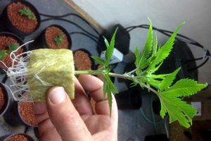 Минеральная вата для выращивания растений