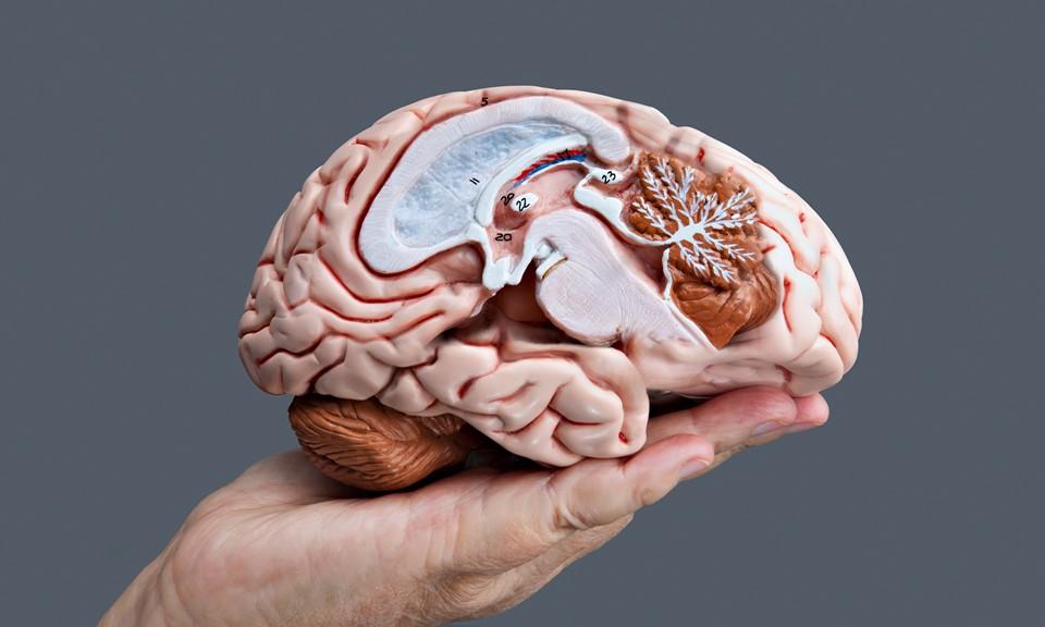 konoplya-povrezhdeniye-mozga