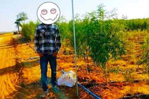 Американец арестован за выращивание 8 гектаров каннабиса в Мьянме (Бирма)