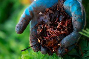 Выращиваем каннабис с методами Корейского Натурального Фермерства