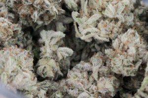 Лучший способ создать настоящий стратегический запас марихуаны. Проверено наукой!