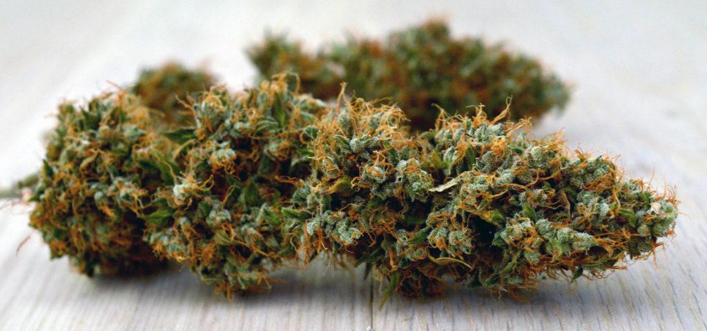 shishka-marihuani