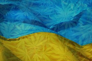 Результативное лечение без побочных эффектов или как украинцы используют каннабис в терапевтических целях