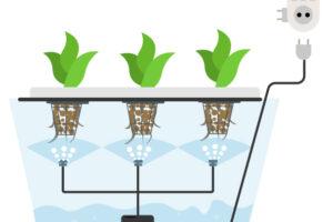 Выращивание каннабиса с помощью аэропоники