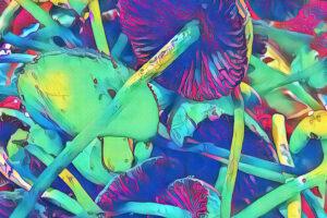 Чем отличаются галлюциногенные грибы от ЛСД